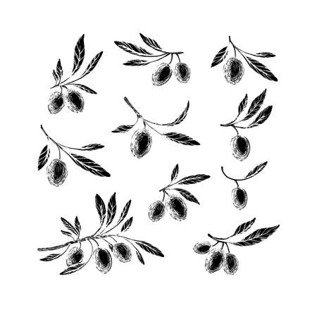 Olive sketch element collection. Vector illustration. Hand drawn plant, green leaves, ripe fruit isolated on white background. Organic oil. Greek or Spanish cuisine cooking symbol
