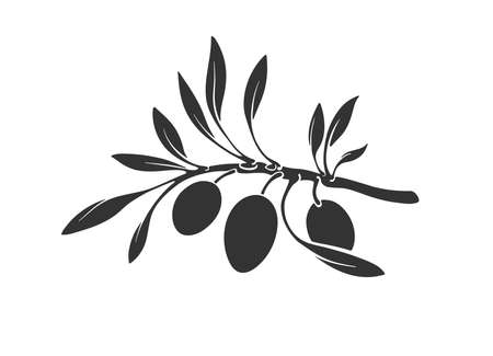 Graphic vector silhouettes of olive tree branch, leaf. Botanical black illustration isolated on white background. Graphic art image, simple label. Organic greece oil