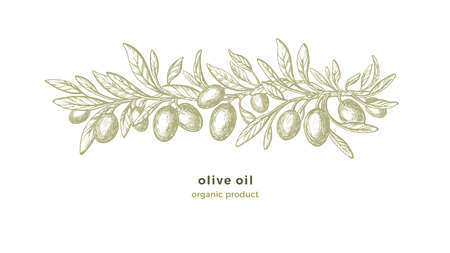 Olive sketch pattern. Vector hand drawn decorations with texture branches, green fruit, vintage leaf on white background. Organic nature illustration. Vegan food