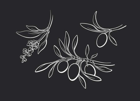 Olive contour set of branch, sprout, ripe fruits, flowers. Vector art sketch monochrome illustration. Hand drawn graphic collection. Organic greek virgin oil