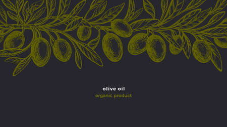Olive vintage frieze. Vector hand drawn pattern with texture branches, green fruit, sketch leaves. Organic natural italian food. Farm harvest, green plantation