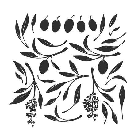 Kalamata olives set silhouettes. Vector black shape of branch, isolated leaves, fruits, flower on white background. Nature illustration, simple print. Greek organic food