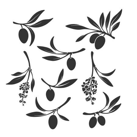 Olive branch set. Vector black silhouette of fruits on white background. Nature shape isolated. Collection of organic symbol, print. Spain, italy farm harvest