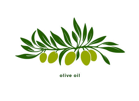 Silhouette of olive tree, green fruit, leaves, isolated on white background. Vector pattern. Organic natural oil. Wild harvest. Design for print, simple symbol, stylized logo Logos