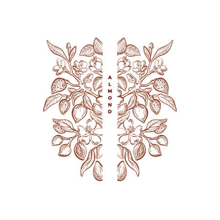 Almond nuts ornament. Graphic vintage frame. Floral victorian symbol. Vector nature plant, sketch leaves on white background. Art filigree elegant emblem, organic hand drawn pattern