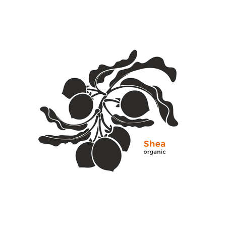 Shea branch print. Vector silhouette of nuts, leaves. Nature symbol. Black shape isolated on white background. Natural food, organic essential butter, tropical product