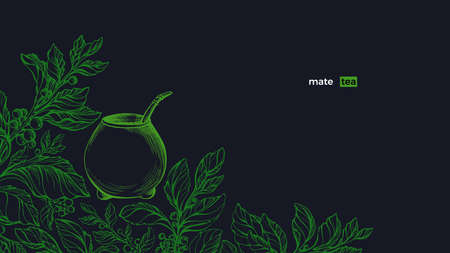 Yerba mate. Green plant set, calabash. Vector fresh bush, sketch leaves, organic plantation. Art hand drawn illustration. Healthy traditional herb tea drink