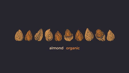Almond nuts set. Vector texture golden shape isolated. Healthy food, vegan milk, aroma butter. Art hand drawn engrave illustration 向量圖像