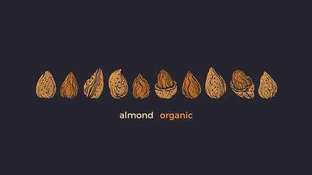 Almond nuts set. Vector texture golden shape isolated. Healthy food, vegan milk, aroma butter. Art hand drawn engrave illustration Иллюстрация
