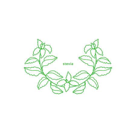 Stevia simple symbol. Vector green branch, fresh herb sugar leaf. Health diabetic diet. Organic drink. Botanical hand draw plant. Graphic art line illustration