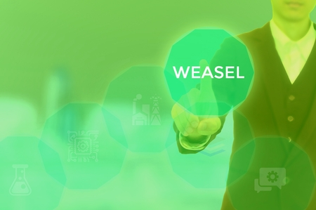 WEASEL - technology and business concept Stok Fotoğraf - 119613740
