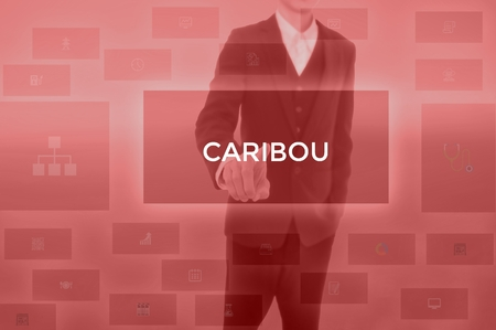 CARIBOU - technology and business concept Stock Photo - 119615124