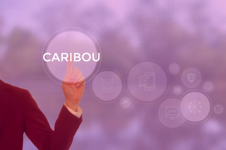 CARIBOU - technology and business concept Stock Photo - 119755130