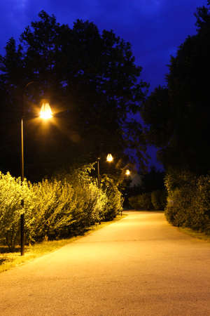 treed: Trail in the park lit up at night, from lampposts
