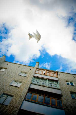 White doves flying on blue sky Stock Photo - 7011950
