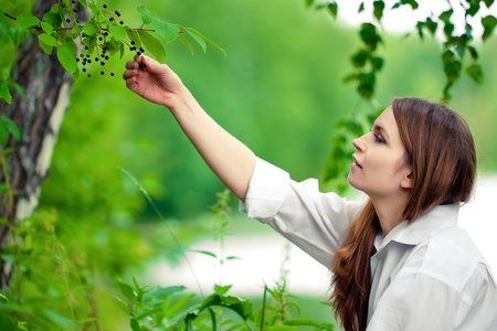 Woman in white picking chokecherries photo
