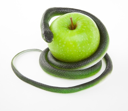 forbidden love: Snake coiling around an apple on a white background