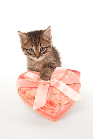 Funny kitten with heart-shaped box photo