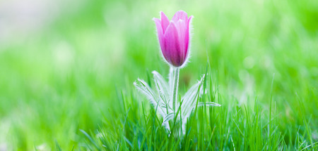 Photo of snowdrop against green grass (focus on a flower)
