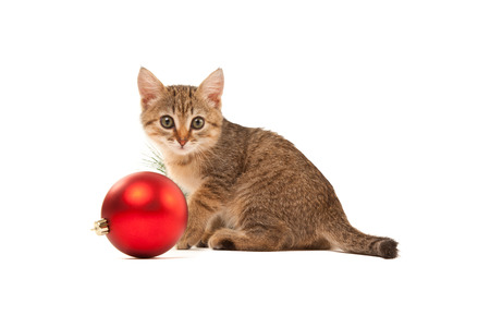new year cat: Cat with a new year red ball on white background