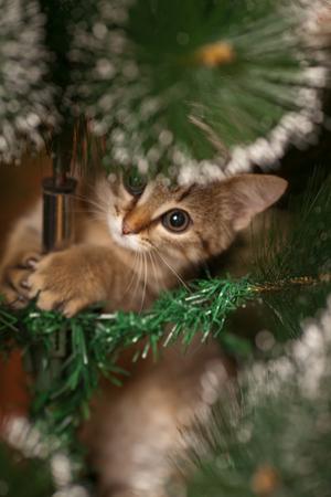 Cute kitten climbing on a new year tree
