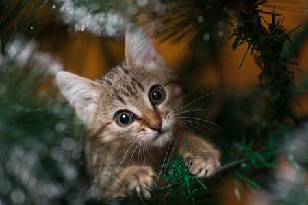 rape: Cat climbing on a new year tree