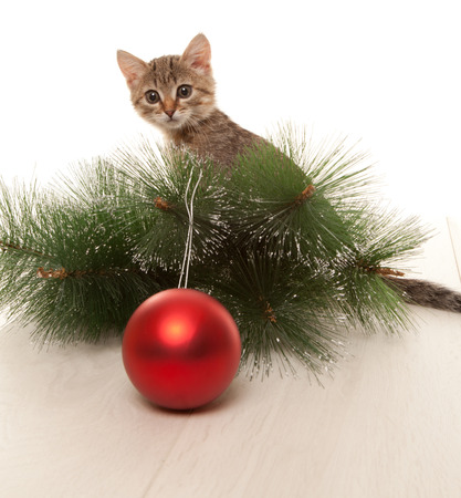 Cat with a new year ball and a pine tree twig