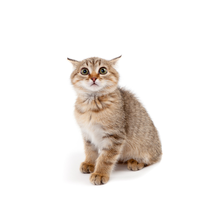 Picture of scared kitten isolated on white
