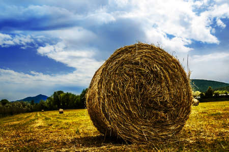 bale of straw Stock Photo - 15576533