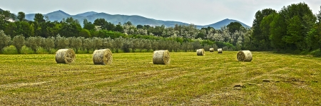 panoramic view of a field with straw rolls Stock Photo - 16855638