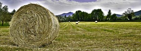 panoramic view of a field with straw rolls