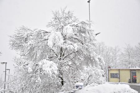 abundant snowfall with snow-covered tree