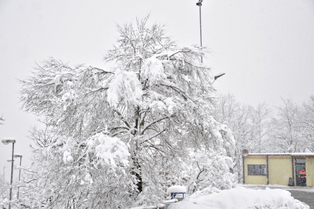abundant snowfall with snow-covered tree