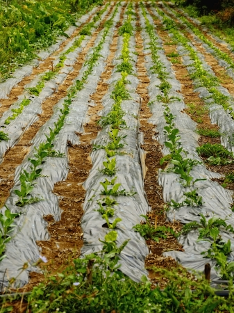 farmland with salad Stock Photo - 22235811