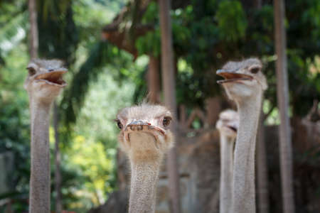 curiousness: ostrich head at Khao keaw Open Zoo Thailand.