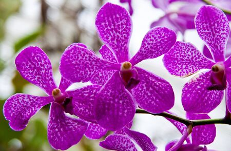 Close up of orchid flower Stock Photo
