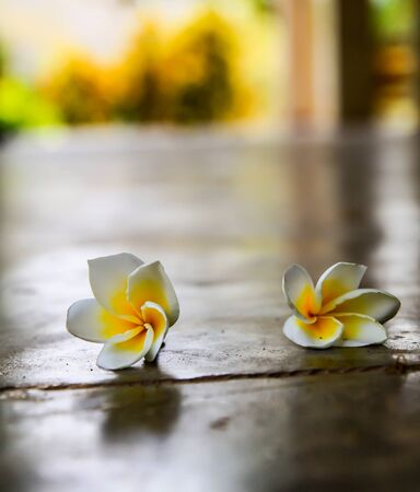 Tropical flowers frangipani on wood Stock Photo - 14956670