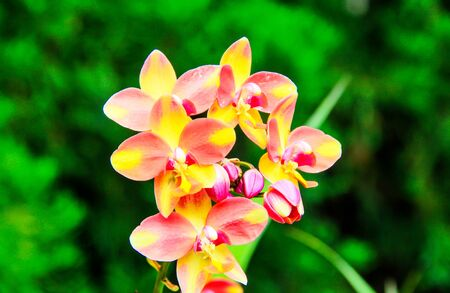 Colorful orchids growing in a garden
