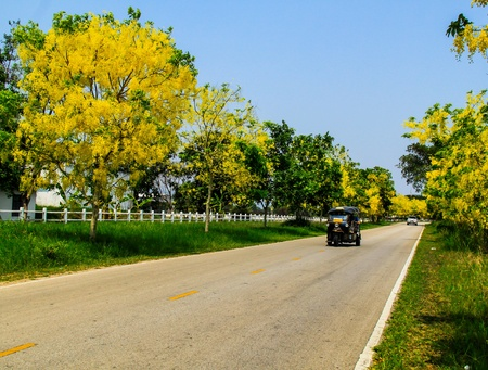 macadam: Country road making a curve with yellowlower Stock Photo
