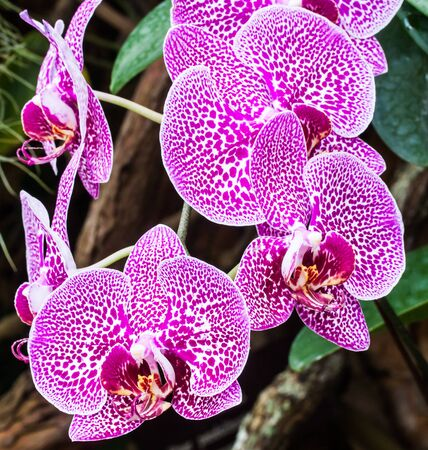Colorful orchids growing in a garden photo