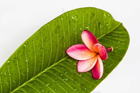Frangipani flowers in the spa Stock Photo