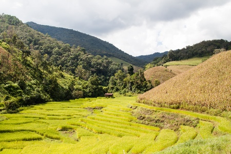 Steps rice field in northern part of Thailand Stock Photo - 16432821