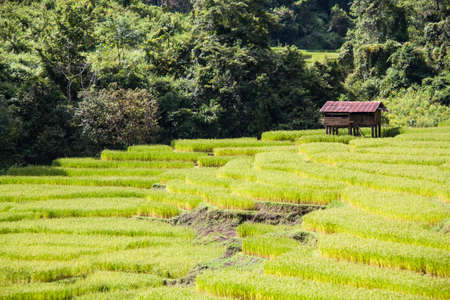Steps rice field in northern part of Thailand. Stock Photo - 16432822