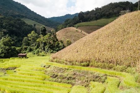 Steps rice field in northern part of Thailand. Stock Photo - 16432853