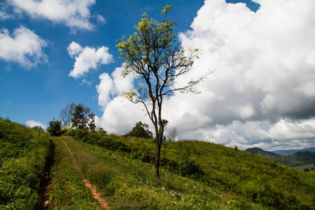 Summer landscape with green grass, road and clouds Stock Photo - 16432818