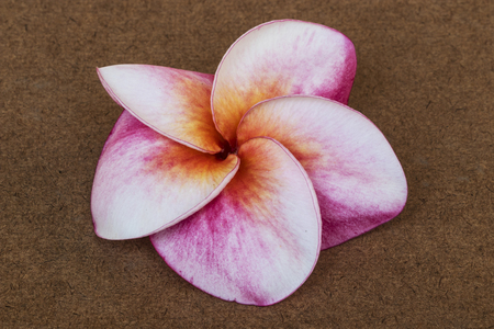 Red Plumeria flowers on wood background