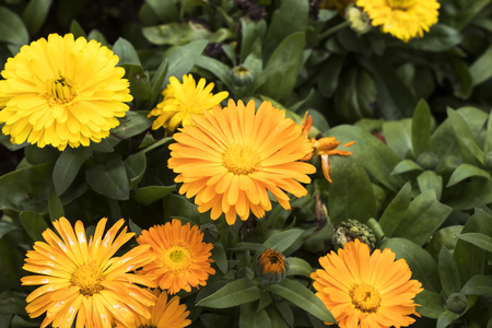 Orange kaner flower on the tree stock photo picture and royalty 81626896 yellow gerbera flower on tree mightylinksfo