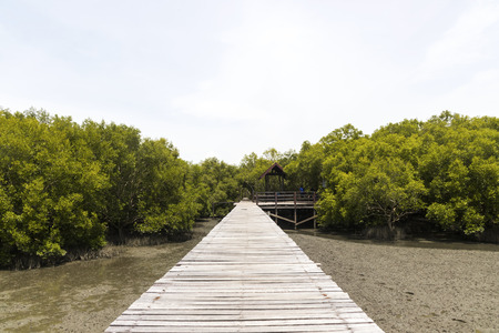 The forest mangrove with wooden walkway bridge