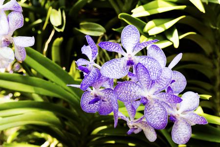 beautiful orchid flower background in garden