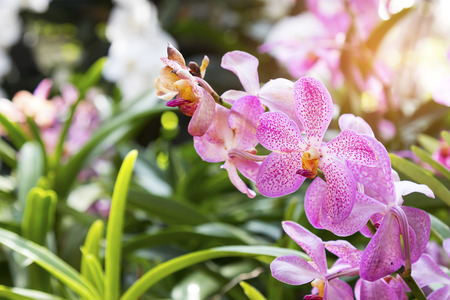 beautiful orchid flower background in garden